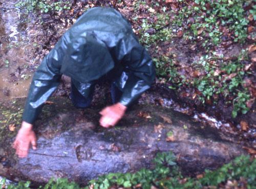 La pierre d'Haravesnes- Forêt de Lucheux-1984