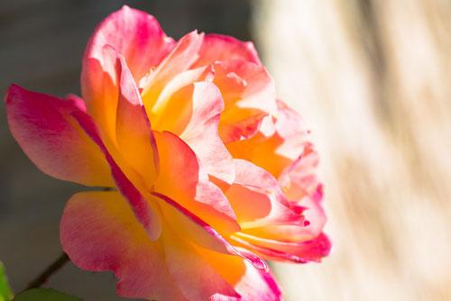 ヒプノセラピー(催眠療法、インナーチャイルド、前世療法、ハイヤーセルフ)岐阜県岐阜市サロンで愛と感動のセラピーを