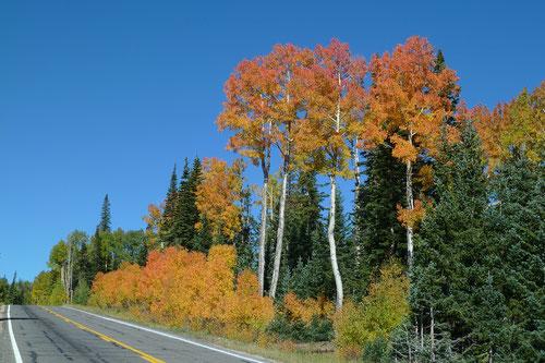 UT 143; Anfahrt zum Cedar Breaks National Monument