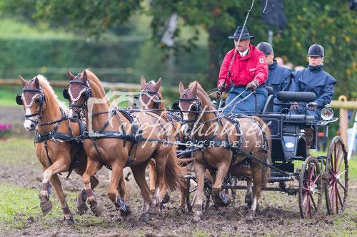 Hindernis Vierspäner-Pferde