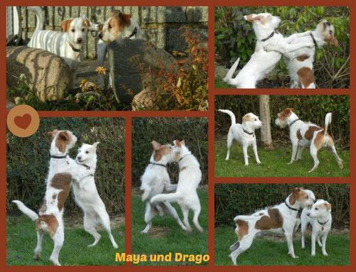 Hochzeit von Maya und Drago