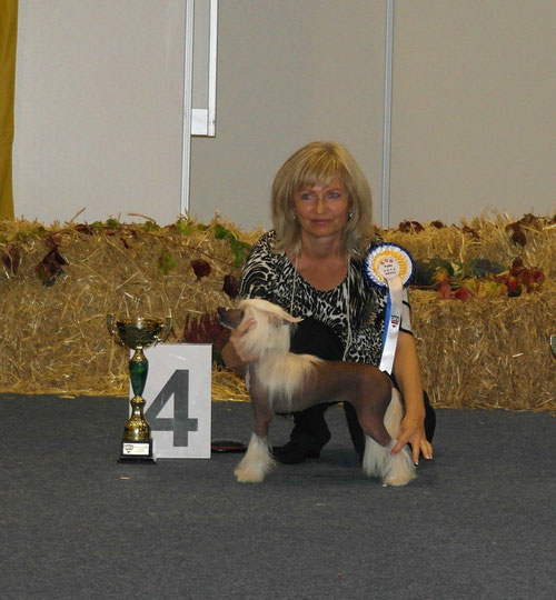 Bundessieger Tulln 2014/09/28, Best of Breed und 4. Platz Best in Group