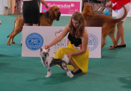 Angel mit JH Kristina Machalekova/SK bei World Dog Show Budapest / HU - 2. Platz in Jüngsten Klasse