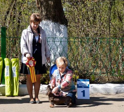 щенок продается такса кроличья жесткошерстная