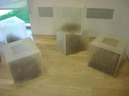 Acículas. Performannce de cajas de plastico tratado y acículas de pino. 2010
