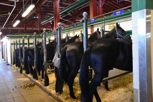 Die Pferde des Musical Ride der RCMP