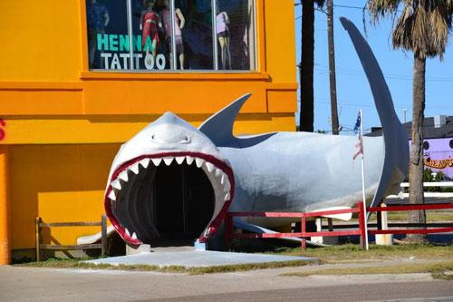 Riesenhaie gibt's hier...