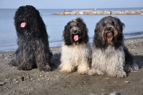 Charly, Andra und Filou September 2014