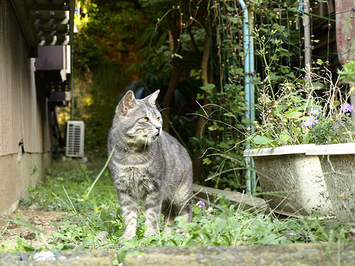 弘明寺の町で出会った猫。おだやかな観音さまの足もとで、ちょっと勇ましい感じ