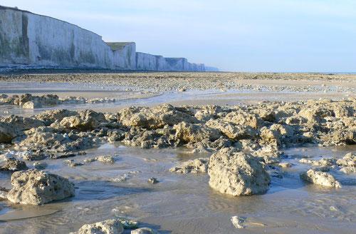 falaises - Baie de Somme - oiseaux - fossiles - mollusques - histoire - géologie - dinosaures - sortie nature - guide