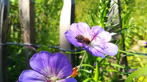 Natur im Garten - Permakultur - Workshops / Kurse zur Gartengestaltung
