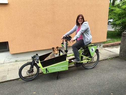 Osteopathie für Katzen und Hunde Augsburg