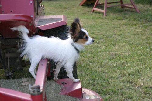 Unsere Betreuungshunde bei Hundesitter Wien