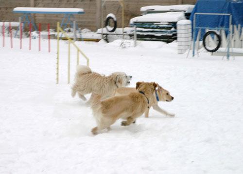 Auch im Winter gibt es Action beim Wiener Hundesitter