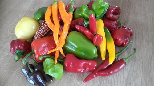 Verschidene scharfe Früchte, von grün, lila, orange bis rot! Foto Bio Gärtnerei Kirnstötter