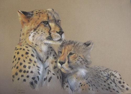 Cheeta met jong  -  Pastel  35 x 50 cm
