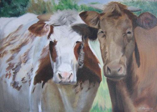 Koeien  -  Olieverf  50 x 70 cm