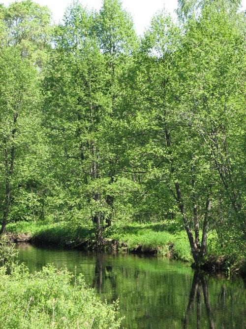 Чудесная речка Кудь