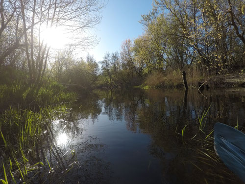 Творческая лаборатория НБ, Николай Борода, река Медведица, река Арчеда