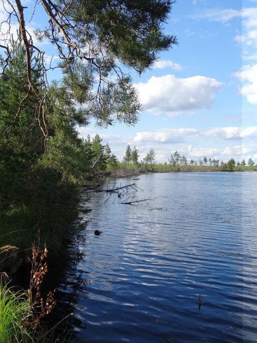 озеро Оленье, Творческая лаборатория НБ