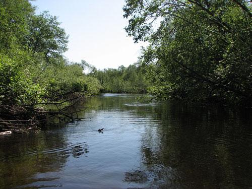 река Руна