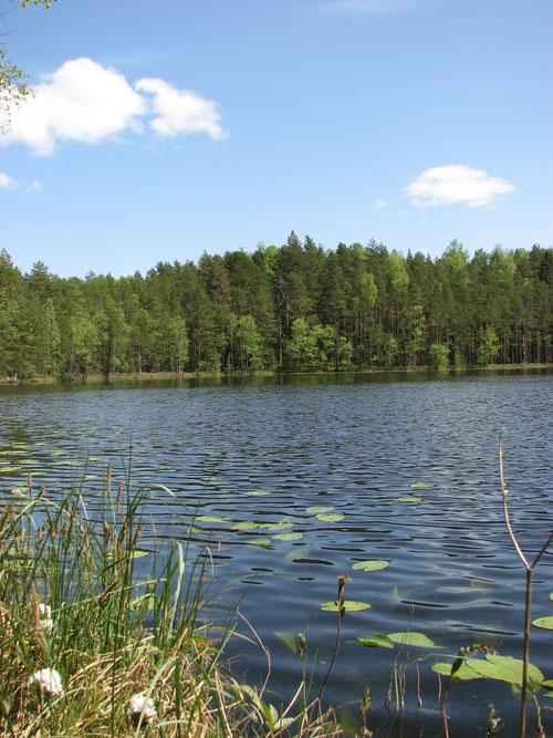Безымянное озеро в двух километрах от д. Адворица