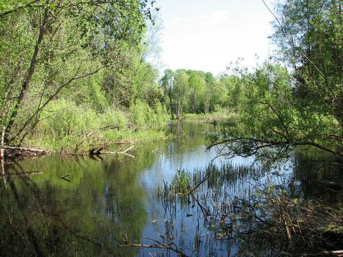 Река Волга недалеко от истока