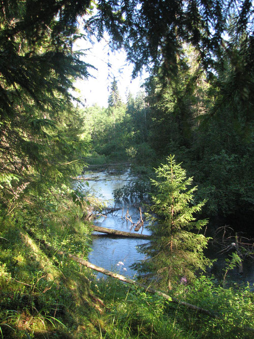Н. Борода река Валдайка