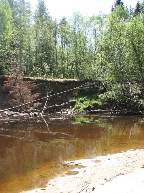 Река Циновля