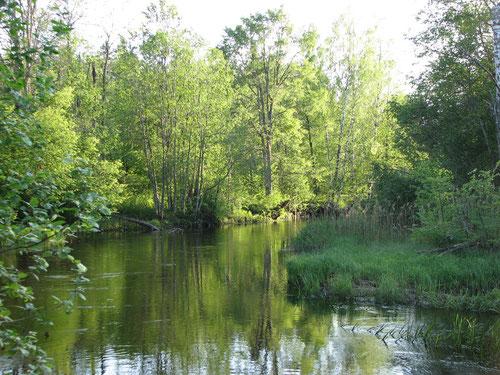Река Кудь