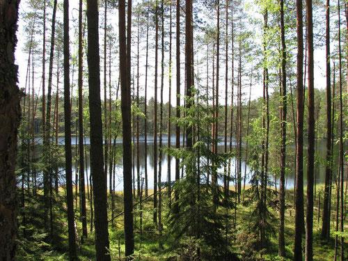 Озеро Половское. Южный берег.