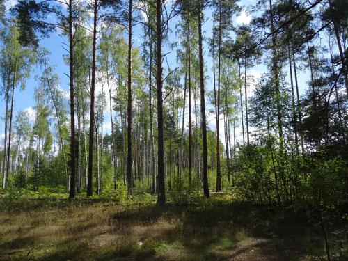 Сухие гривы среди болота, Лаборатория НБ