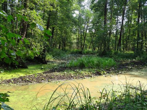 Пойменное болото реки Сеньги, Творческая лаборатория НБ