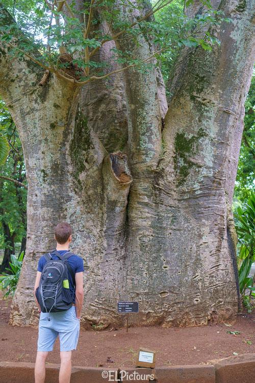 Botanischer Garten Pampelmousse, Mauritius