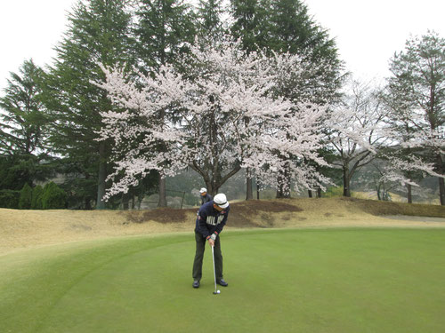 足利城ゴルフ倶楽部の3番ホールの桜