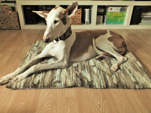 Exklusive Hundedecke aus hochwertigem Fellimitat