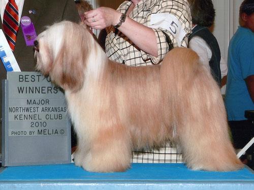 Max_Michael Vogt_Peter Künzel_Dortmund_Oelde_Tibet Terrier