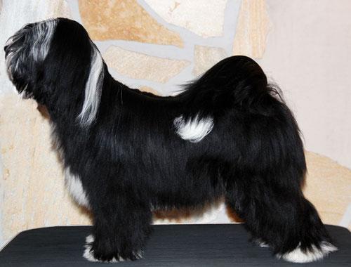 Michael Vogt_Dortmund_Peter Künzel_Tibet Terrier_Oelde_KTR