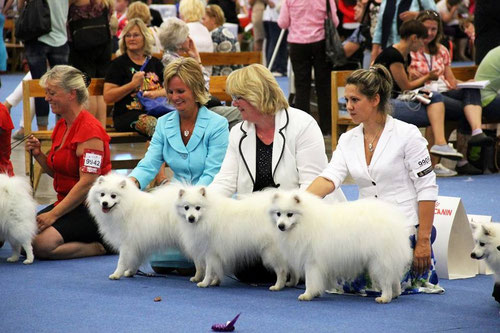 "2 Best Breeders Group - kennel ""JASAM'S"""