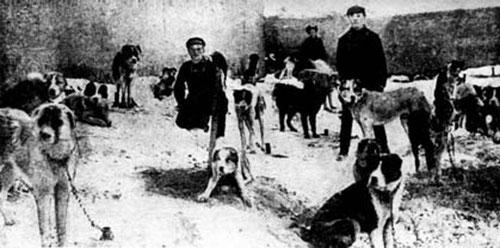 Cani al seguito dell'Armata Rossa