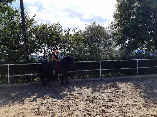 Klassische Dressur, Dressurteaining,  Pferdetraining, Dorfer Hannah, Beritt, Korrektur Pferde, Behandlung von Pferdetaumatas,  Jungpferdausbildung, Pferdeausbildung,  Freiheitsdressur und Kinderunterricht