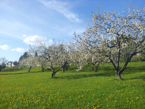 Landscape in Sweden - Kunnasberg Language Academy