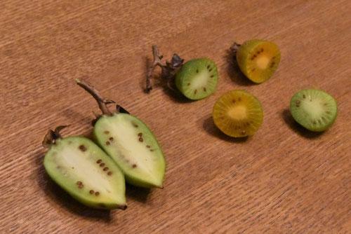 木天蓼の果実,画像
