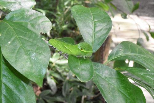 蝶の餌になる木