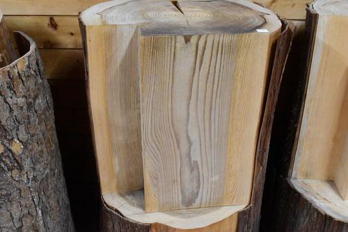 Japanese cedar tree
