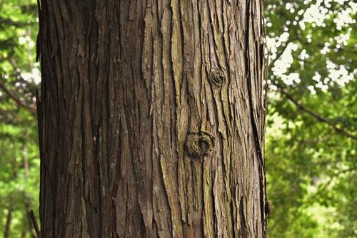 さわら木 とは