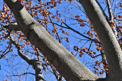 千鳥木 幹