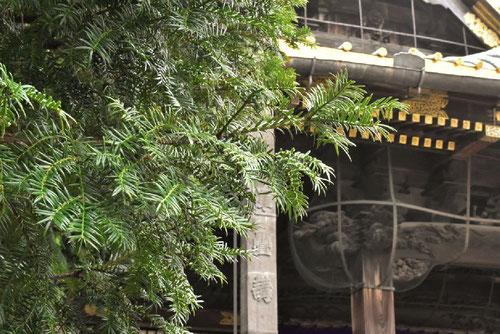 カヤの木,お寺