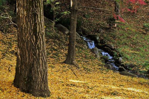 銀杏の樹皮 画像