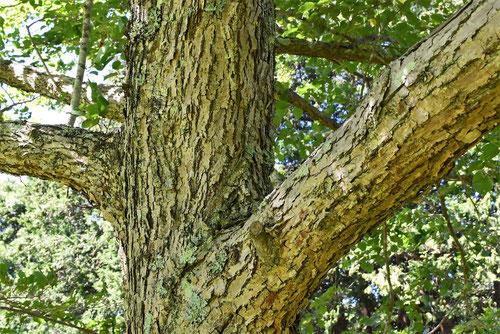 縄の材料 木